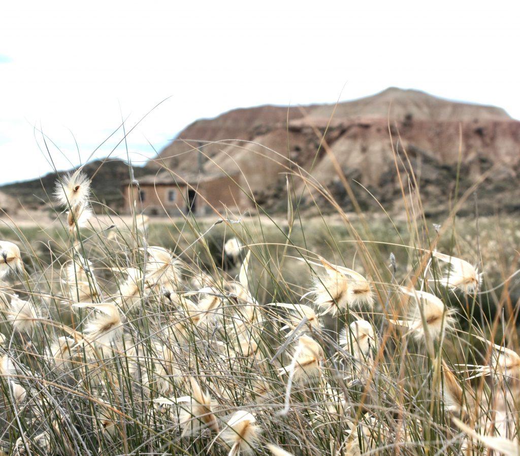 Végétation dans le désert des Bardenas Reales