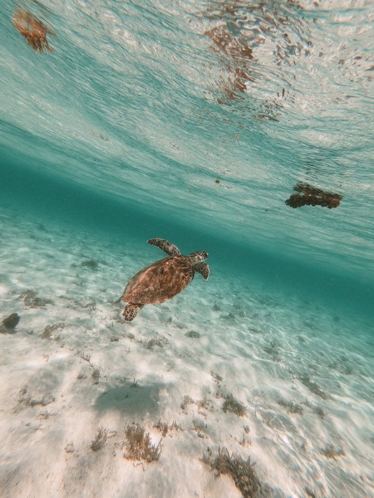 Tortue lagon Petite-Terre