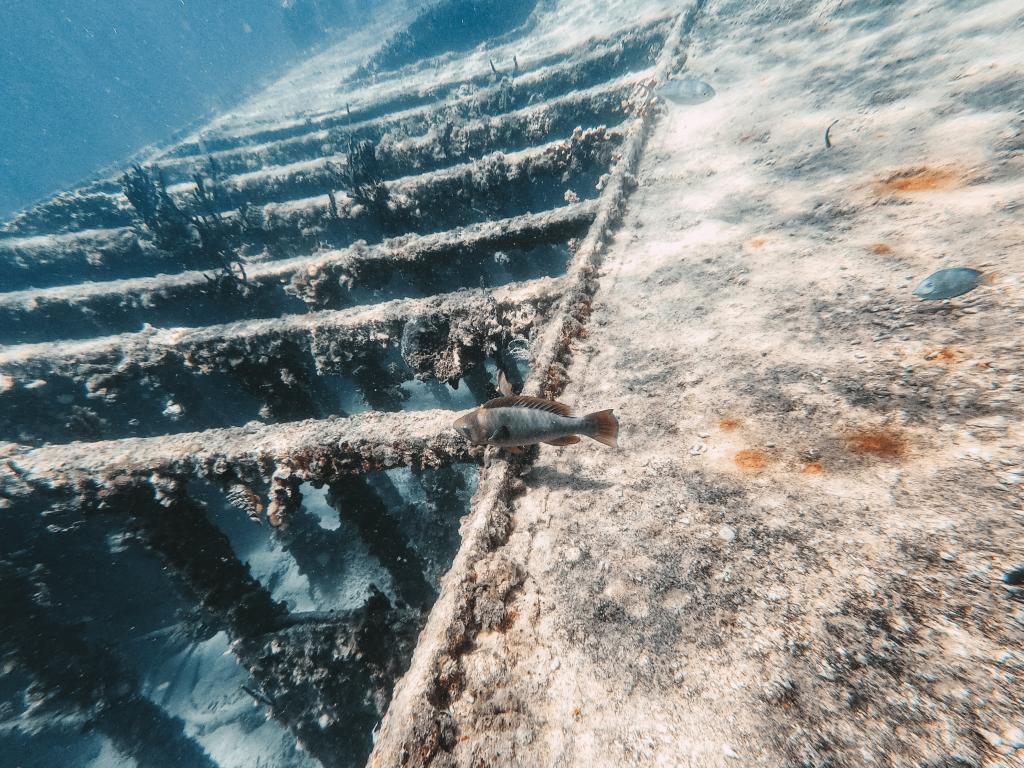 Epave du Grand cul-de-sac marin
