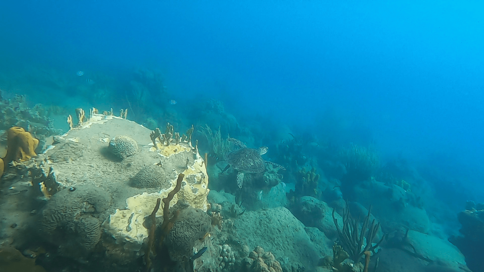 tortue marine plage de Malendure