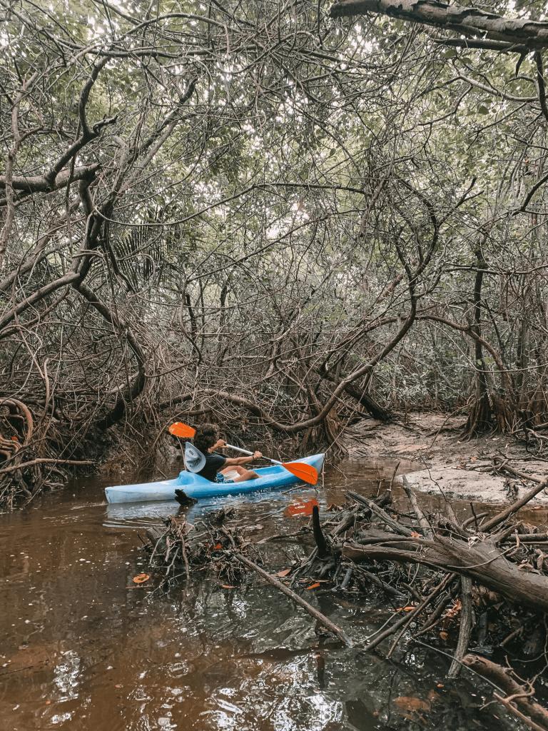 Mangrove de Deshaies
